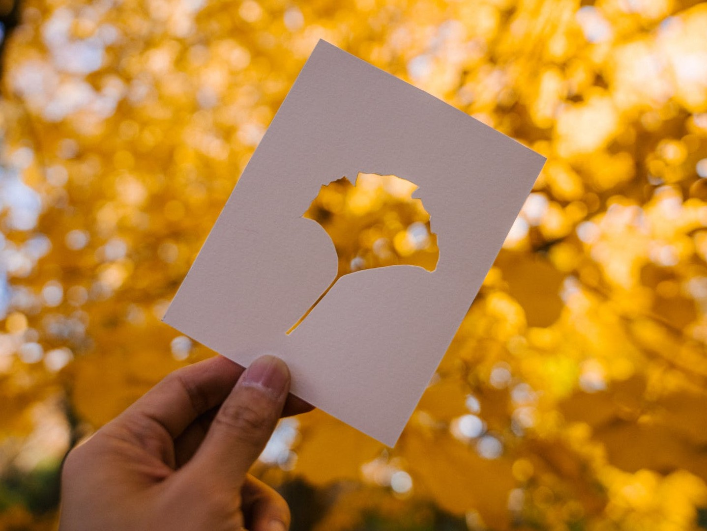 person showing card against yellow autumn leaves